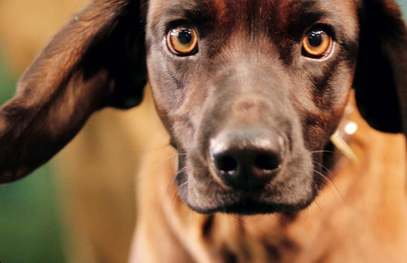 Famiglie allargate (al cane)