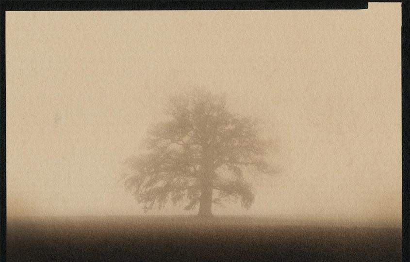 L'albero nella nebbia di Francesco Arese Visconti