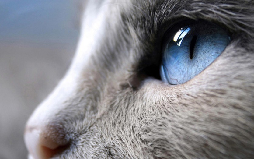 Il gatto di Montaigne (parte I)