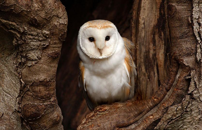 Era un uccellatore, comprendeva ogni loro verso e sapeva attirarli tutti…