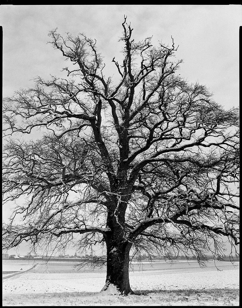 L'albero di Francesco Arese Visconti