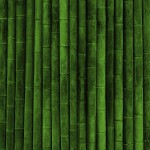 bamboo-green-nature-2805114-1920x1200