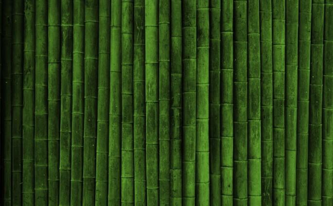 bamboo-green-nature-2805114-1920x1200